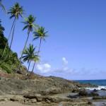 Coqueiras e praias